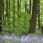 Guided Walks in the New Forest